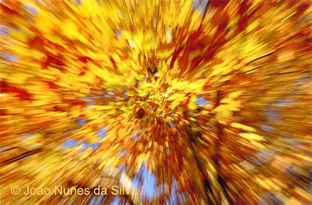 ©JNS_Explosão Outonal (1)